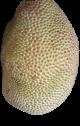 jackfruit-chips-vinamit-1