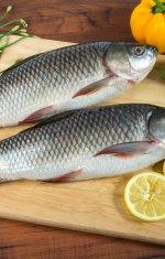 ryba-rohu